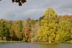 Autumn colours in woodland - stock photo