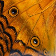 Stock Photo of orange butterfly wing
