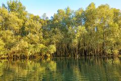 Trees in the water - stock photo