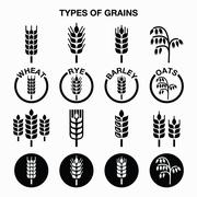 Types of grains, cereals icons - wheat, rye, barley, oats - stock illustration