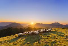 Flock of sheep in Saibi mountain Stock Photos