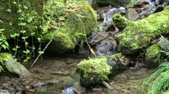 Beautiful small brook and stones with green moss, sound Stock Footage