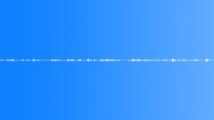 Meadow Cuckoo Birds Magpie Mono Loop Sound Effect