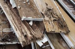 termite damage rotten wood eat nest destroy concept - stock photo