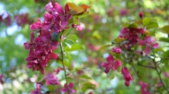 Maroon Burgundy Flowers On Green Bus Close View The Wind Rustles Green Leafs - stock footage