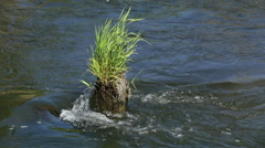 Grass Survives in Flodding Forest River Stock Footage