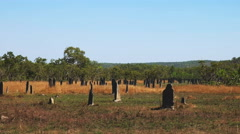 Magnetic termite mounds Stock Footage
