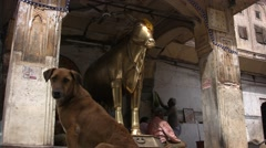 Dog and in gold statue of cow in India Stock Footage
