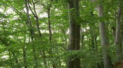 Path with Leaves in the Woods Stock Footage