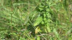 Caterpillar in the Grass Stock Footage