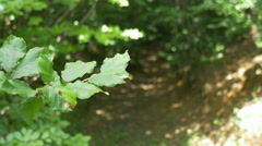 In the Forest View Stock Footage