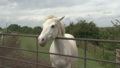 White pony at gate. Stock Footage