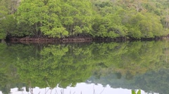 Mangrove trees next to the ocean in National Park, Koh Kood Island, Thailand Stock Footage
