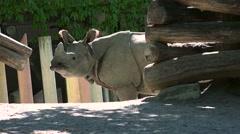 ULTRA HD 4K real time shot,Big rhinoceros in zoological garden Stock Footage