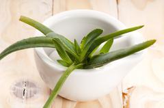 Stock Photo of Aloe vera - herbal medicine
