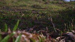 Row of busy ants on tree root Stock Footage
