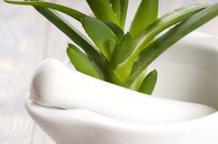 Aloe vera - herbal medicine Stock Photos