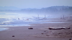 Static shot of drift wood on the beach Stock Footage
