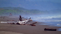 Several branches of driftwood rest on a beach Stock Footage