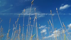 Blue sky background with grass Stock Footage