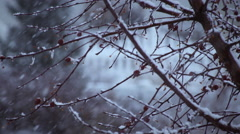 Close-up shot of a tree's branches during a snowstorm - stock footage