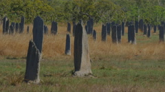 termite mounds - stock footage