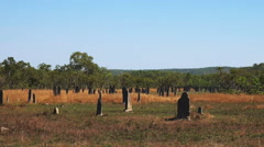 Magnetic termite mounds wide view Stock Footage