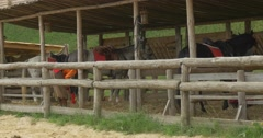 Actors Are Cleaning The Stable, Grooming the Horses Stock Footage