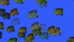 4k Aquarium fish underwater background,sea ocean fishing ecology biological. Stock Footage