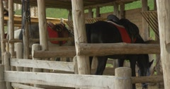 Three Horses Are in Stable, Eating From Manger, Left Side View Stock Footage