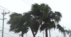 Palm Trees Thrash As Hurricane Winds Hit Stock Footage