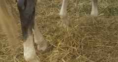 White and Brown Horse Legs, Tilt up, Horse in a Stable Stock Footage