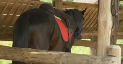 Brown Horse in The Stable, Standing, Turning Stock Footage