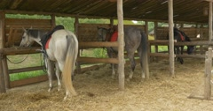 Three Horses Are in Stable, Eating From Manger, Right Side View Stock Footage