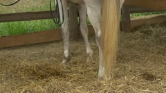 White Horse's Legs Closeup, Stable, Steps, Slow Motion, Hay on the Floor Stock Footage