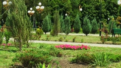 Fir avenue and flowerbed in city park - stock footage