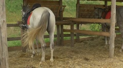Two Horses Are Standing, Feeding in a Stable, Slow Motion Stock Footage