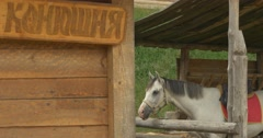 "Wooden Stable White Horse Inscription ""Stable"" on a Wooden Planch Stock Footage"