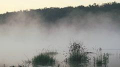 Morning fog moves over a marsh marsh grasses-fast motion Stock Footage