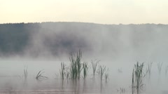 Morning fog rises over a swamp marsh grasses Stock Footage