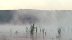 Morning fog rises over a swamp marsh grasses - stock footage