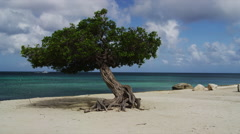 Stock Video Footage of The Divi Divi Tree on Eagle Beach at Sunset, Aruba