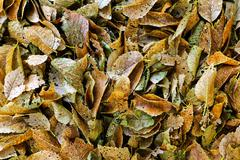 Rotting leaves - stock photo