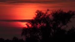 Sunset on tamarisks in the Camargue national park Stock Footage