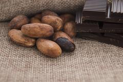 Cocoa (cacao) beans with chocolate Stock Photos