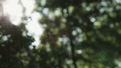 Blurred Green Vegetation Stock Footage