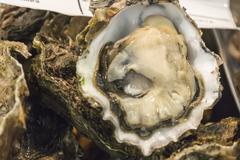 Big fresh oysters (Ostrea edulis) - stock photo