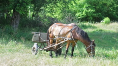 Horse and cart grazing in nature Stock Footage