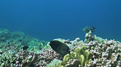 Coral reef with a Moray eel and plenty fish Stock Footage