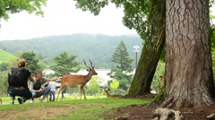 Traveler shooting photo with deers at garden of Todai-ji Temple in Nara, Japan Stock Footage